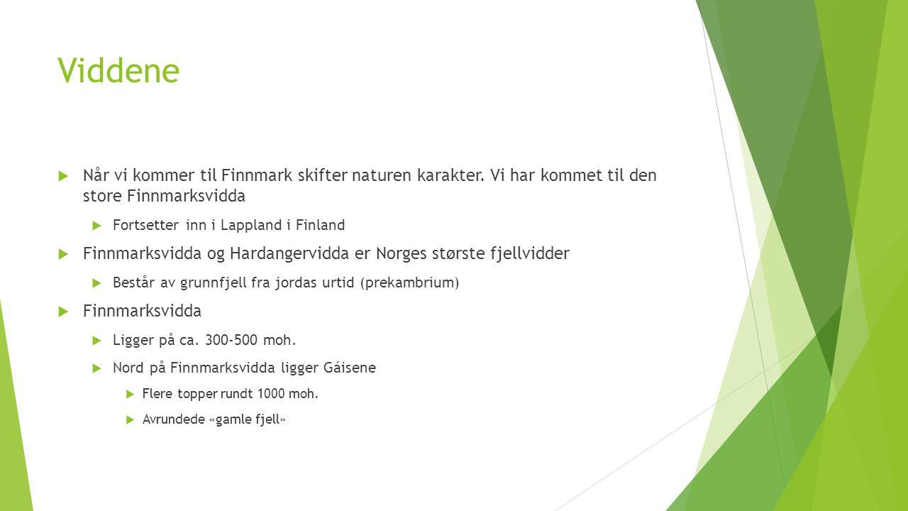 Viddene  Når vi kommer til Finnmark skifter naturen karakter. Vi har kommet til den store Finnmarksvidda  Fortsetter inn i Lappland i Finland  Finn