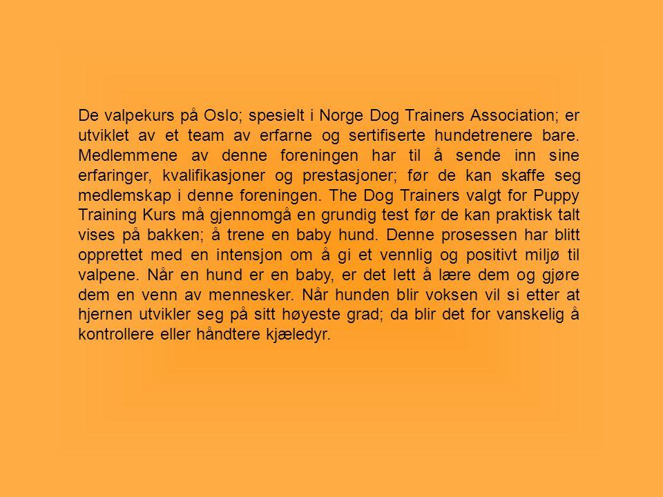 De valpekurs på Oslo; spesielt i Norge Dog Trainers Association; er utviklet av et team av erfarne og sertifiserte hundetrenere bare.