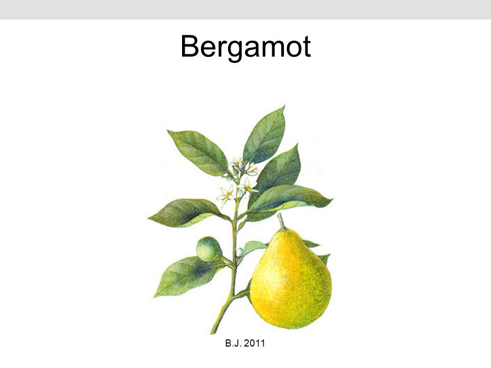 Bergamot B.J. 2011