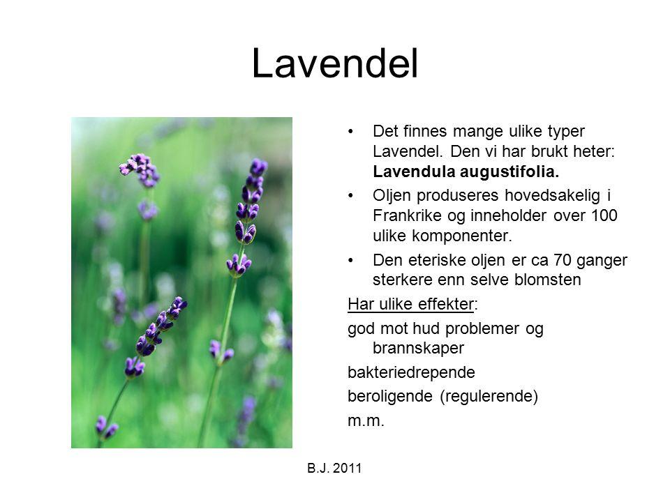 Lavendel Det finnes mange ulike typer Lavendel. Den vi har brukt heter: Lavendula augustifolia. Oljen produseres hovedsakelig i Frankrike og inneholde