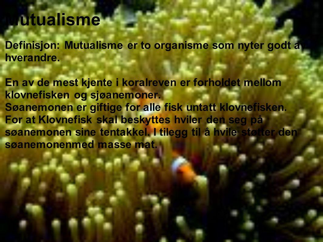 Mutualisme Definisjon: Mutualisme er to organisme som nyter godt av hverandre. En av de mest kjente i koralreven er forholdet mellom klovnefisken og s