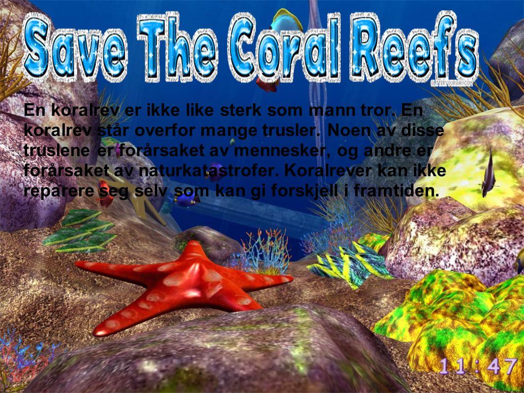 En koralrev er ikke like sterk som mann tror. En koralrev står overfor mange trusler. Noen av disse truslene er forårsaket av mennesker, og andre er f