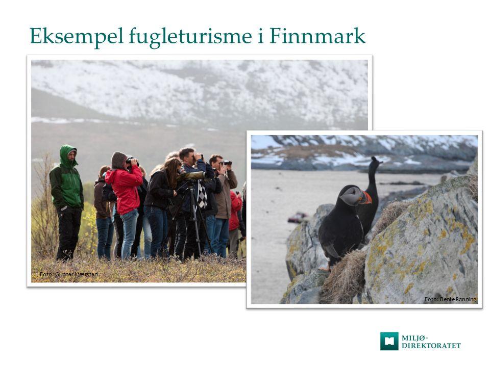 Eksempel fugleturisme i Finnmark Foto: Gunnar Kjærstad Foto: Bente Rønning