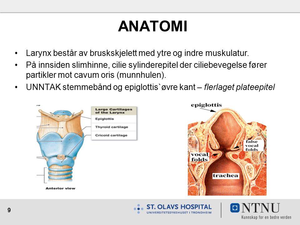 9 ANATOMI Larynx består av bruskskjelett med ytre og indre muskulatur.