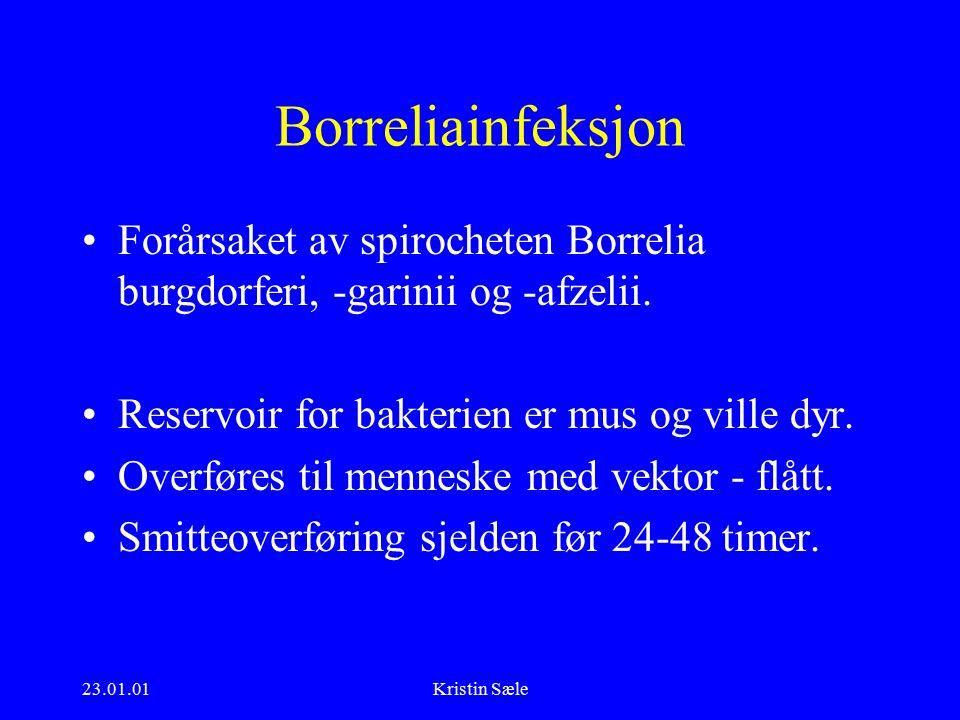 23.01.01Kristin Sæle Borreliainfeksjon Forårsaket av spirocheten Borrelia burgdorferi, -garinii og -afzelii.