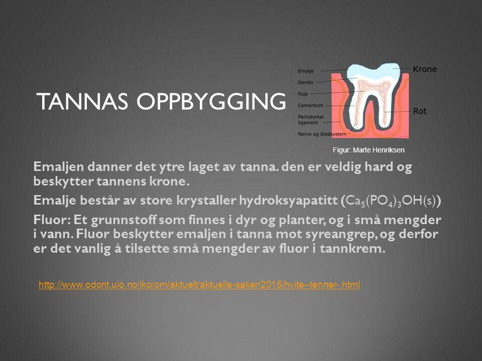 TANNAS OPPBYGGING Emaljen danner det ytre laget av tanna. den er veldig hard og beskytter tannens krone. Emalje består av store krystaller hydroksyapa