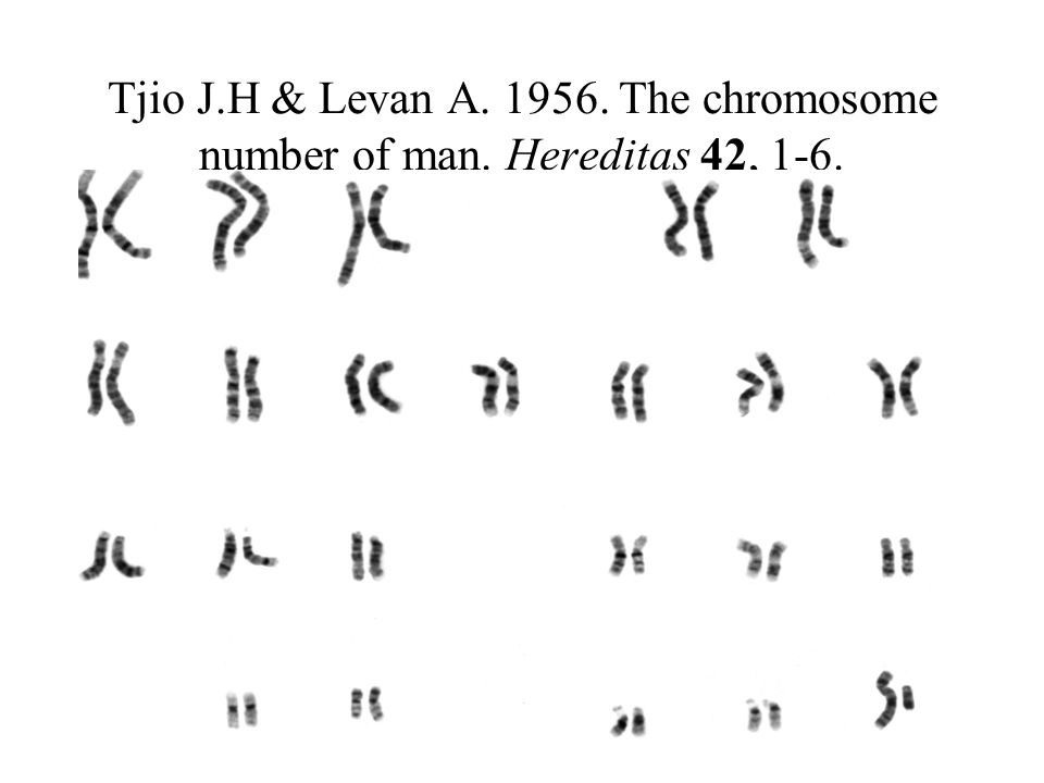 Tjio J.H & Levan A The chromosome number of man.