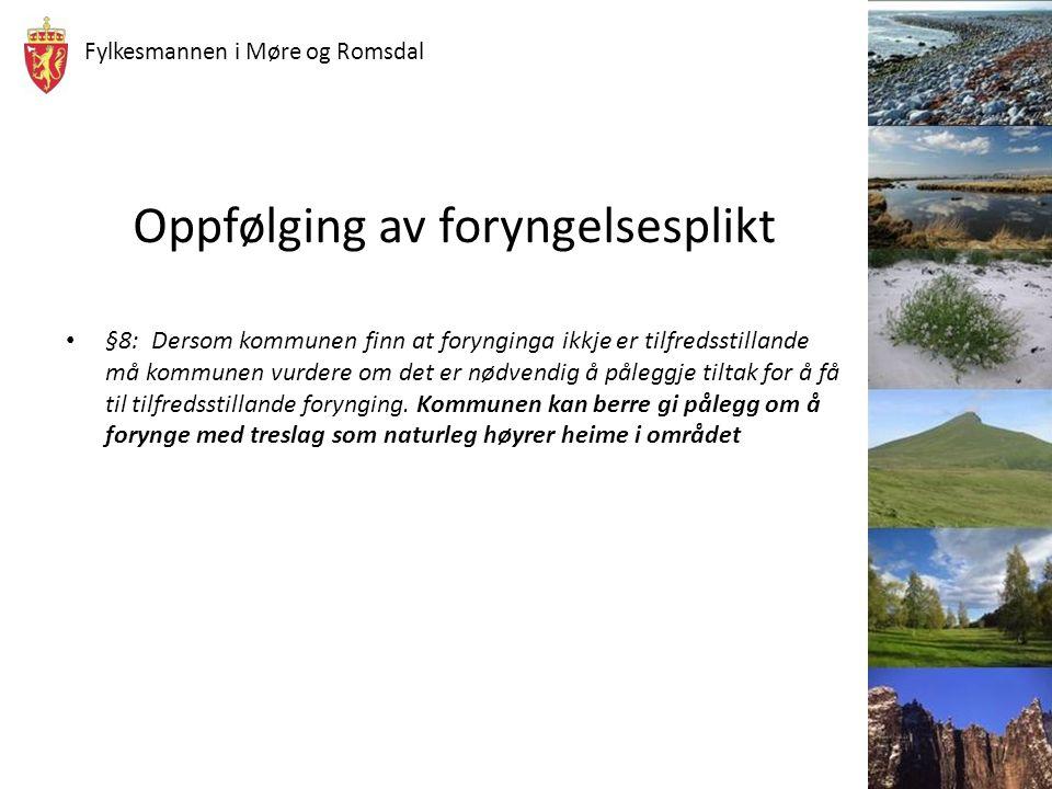 Fylkesmannen i Møre og Romsdal Skogbilde i Møre og Romsdal Bjørk eller ….Gran Hva er naturlig og hva kan vi pålegge skogeier å plante?