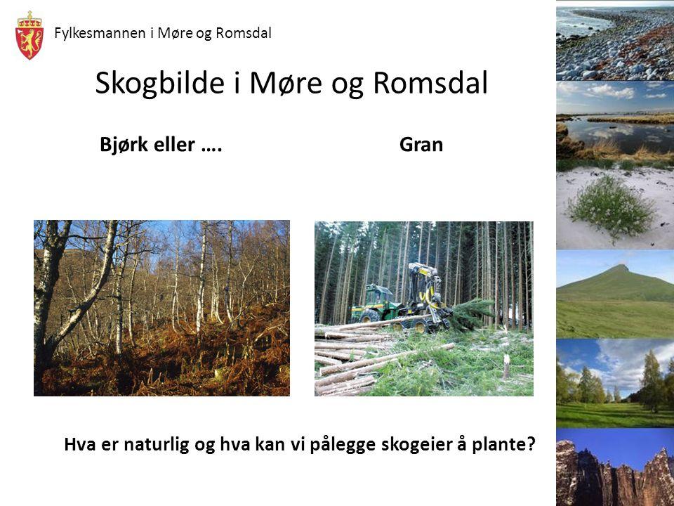 Fylkesmannen i Møre og Romsdal Eksempel: Hogst av 60 år gammelt granbestand på bonitet G20 i et område som har stor grad av treslagsskiftet skog Netto inntekt pr daa 10.000,- Skogeier ønsker ikke å plante gran, men ønsker å få opp naturlig bjørk, dvs dunbjørk.