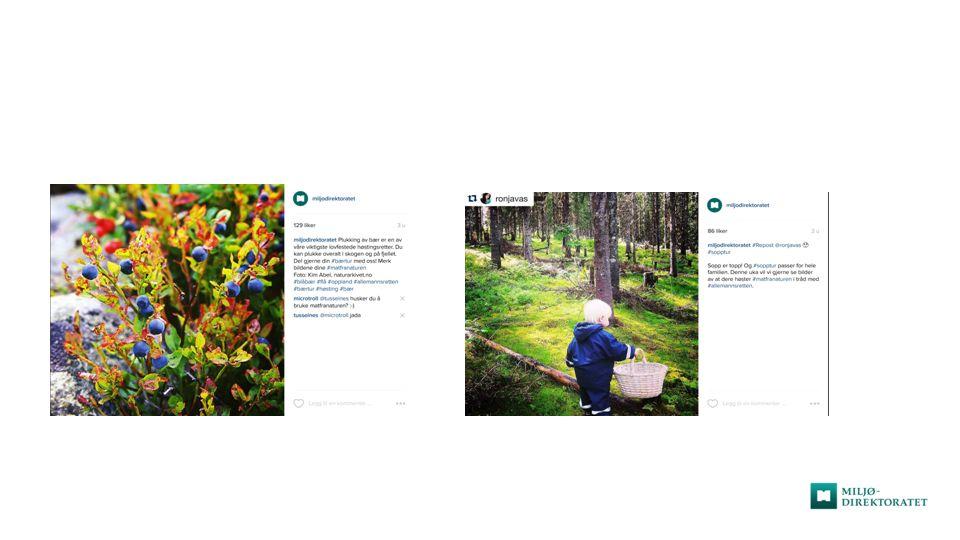 #allemannsretten-kampanje i sosiale medier uke 23/26/33 Facebook: + bildealbum, med flotte bilder av ville blomster, barn og natur.