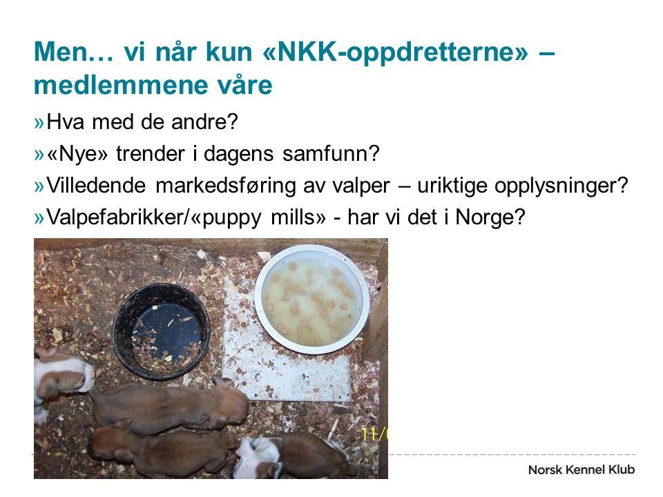 Men… vi når kun «NKK-oppdretterne» – medlemmene våre »Hva med de andre? »«Nye» trender i dagens samfunn? »Villedende markedsføring av valper – uriktig
