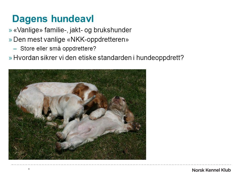 Dagens hundeavl »«Vanlige» familie-, jakt- og brukshunder »Den mest vanlige «NKK-oppdretteren» –Store eller små oppdrettere? »Hvordan sikrer vi den et