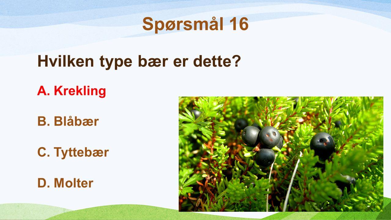 Hvilken type bær er dette? A.Krekling B.Blåbær C.Tyttebær D.Molter Spørsmål 16