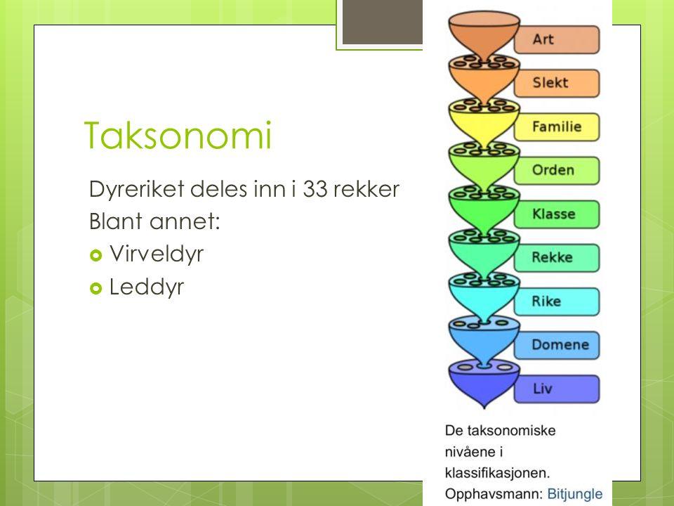 Taksonomi Dyreriket deles inn i 33 rekker Blant annet:  Virveldyr  Leddyr