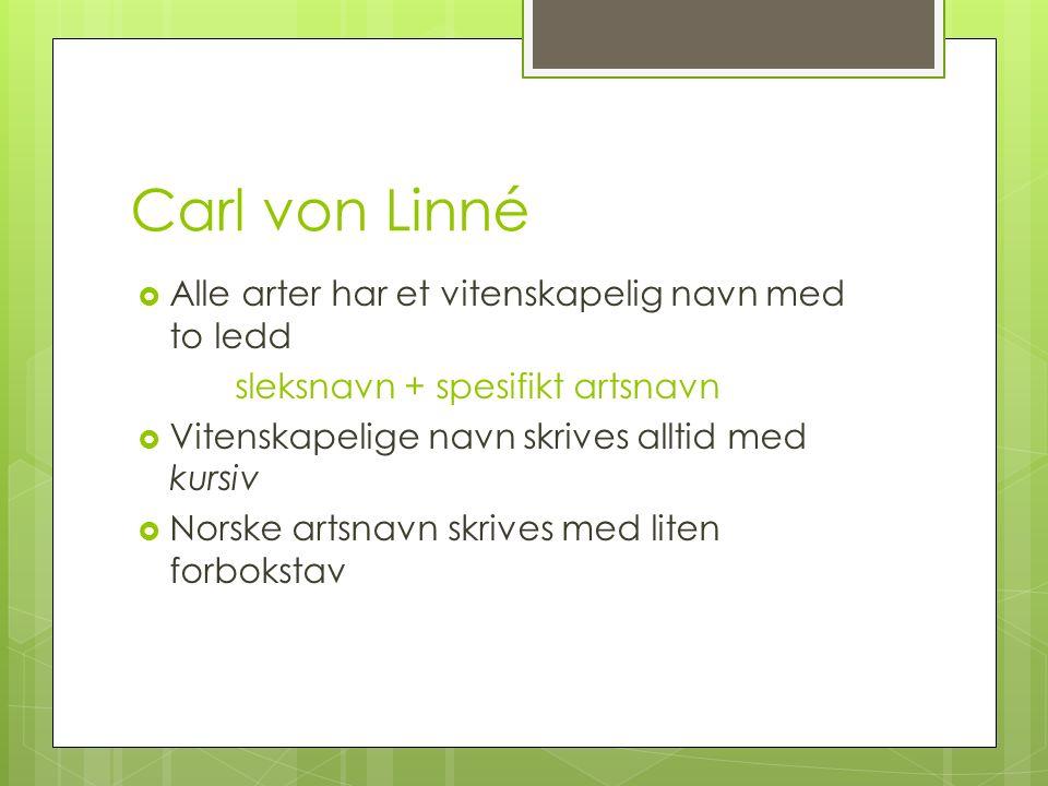 Carl von Linné  Alle arter har et vitenskapelig navn med to ledd sleksnavn + spesifikt artsnavn  Vitenskapelige navn skrives alltid med kursiv  Norske artsnavn skrives med liten forbokstav
