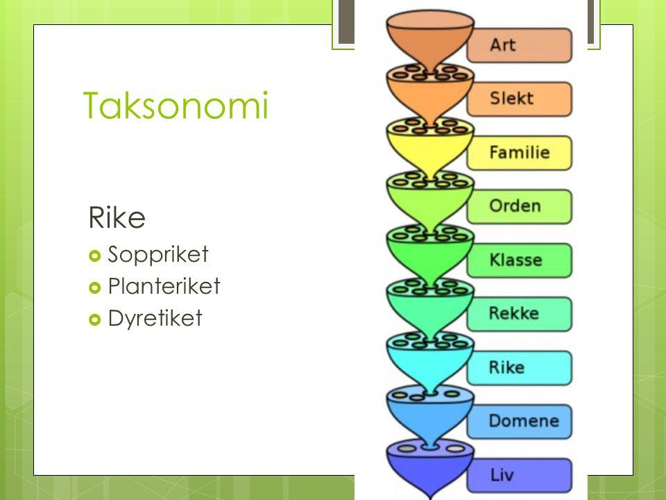 Taksonomi Rike  Soppriket  Planteriket  Dyretiket