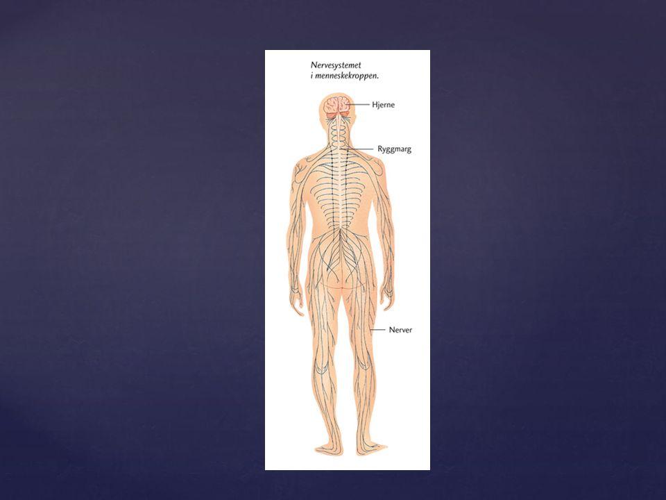 Muskel- og skjelettsansen  sanseceller i musklar, sener og ledd som fortel om kroppens stilling og rørsler Innvollsanser  organa inne i kroppen Trykk- og berøringssansen  trykk og berøring av huda Temperatursansen  temperaturforandringar i huda Kroppssansar  huda, bevegelsesapparatet og indre organ
