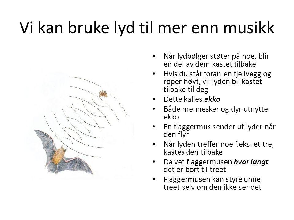 Vi kan bruke lyd til mer enn musikk Når lydbølger støter på noe, blir en del av dem kastet tilbake Hvis du står foran en fjellvegg og roper høyt, vil lyden bli kastet tilbake til deg Dette kalles ekko Både mennesker og dyr utnytter ekko En flaggermus sender ut lyder når den flyr Når lyden treffer noe f.eks.