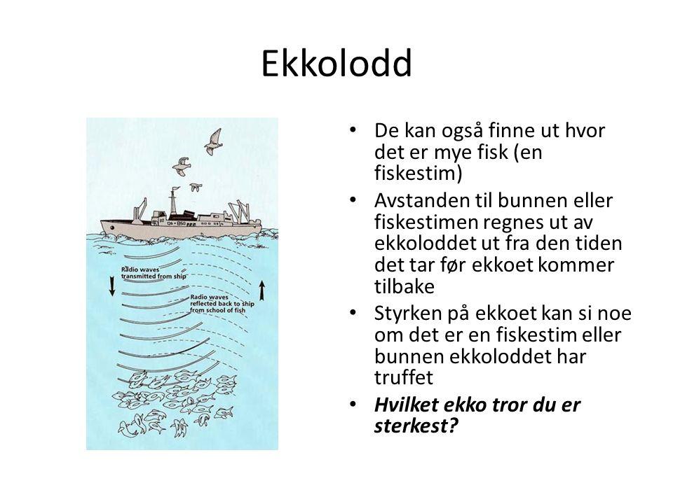 Ekkolodd De kan også finne ut hvor det er mye fisk (en fiskestim) Avstanden til bunnen eller fiskestimen regnes ut av ekkoloddet ut fra den tiden det