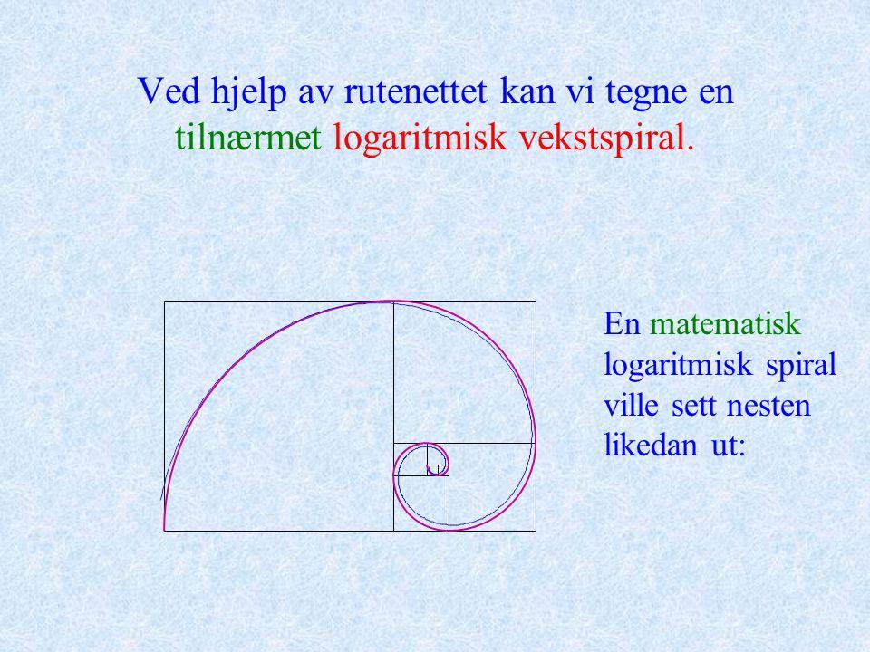 Ved hjelp av rutenettet kan vi tegne en tilnærmet logaritmisk vekstspiral. En matematisk logaritmisk spiral ville sett nesten likedan ut: