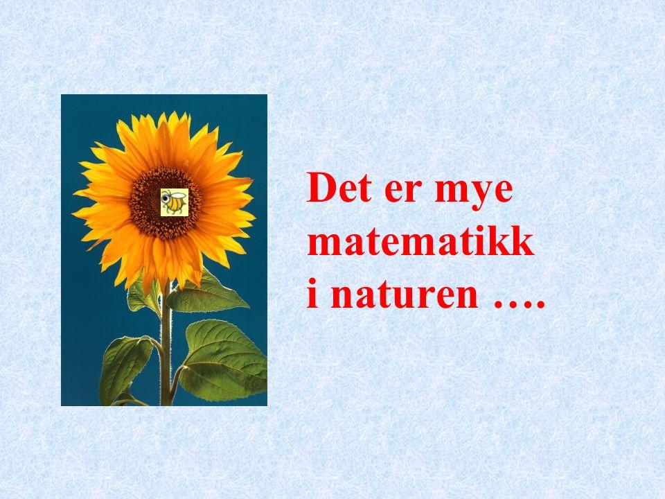 Det er mye matematikk i naturen ….