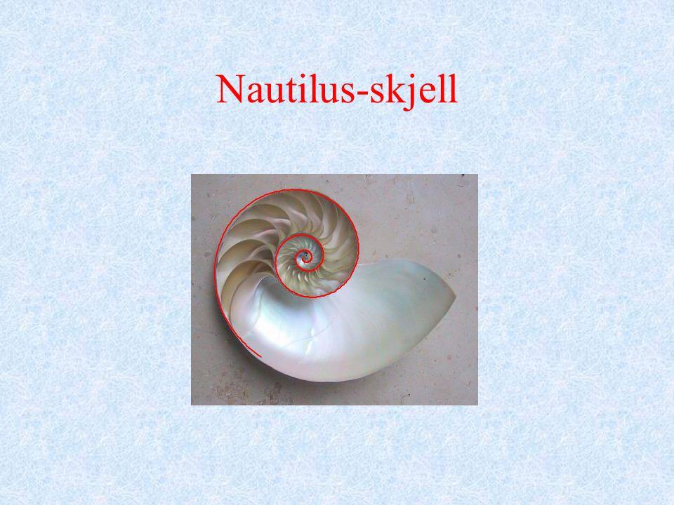 Nautilus-skjell