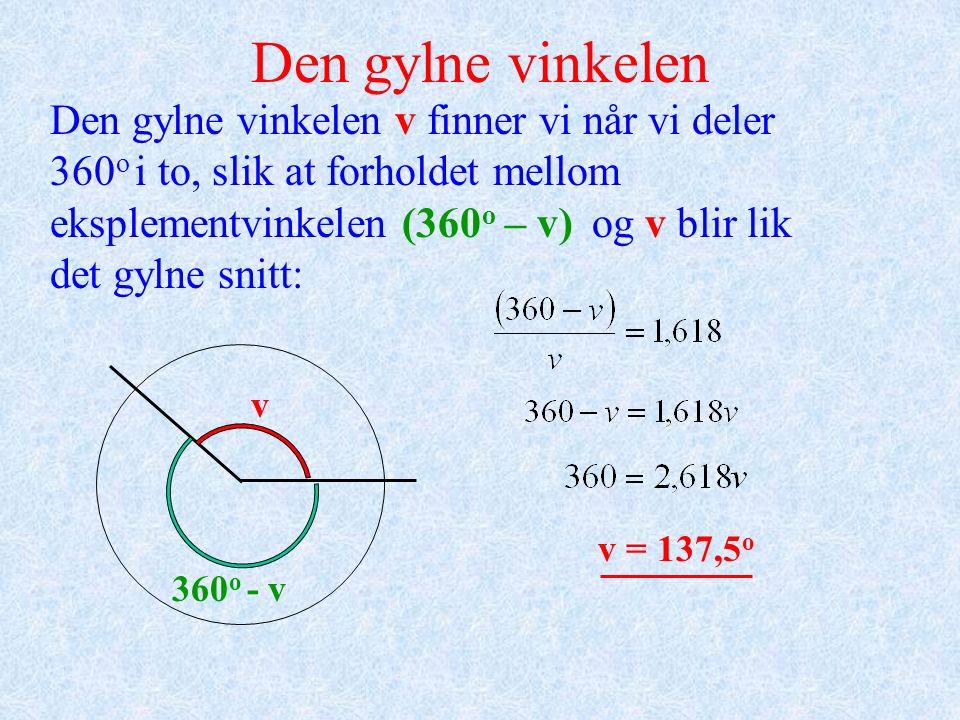 Den gylne vinkelen v finner vi når vi deler 360 o i to, slik at forholdet mellom eksplementvinkelen (360 o – v) og v blir lik det gylne snitt: Den gylne vinkelen v 360 o - v v = 137,5 o