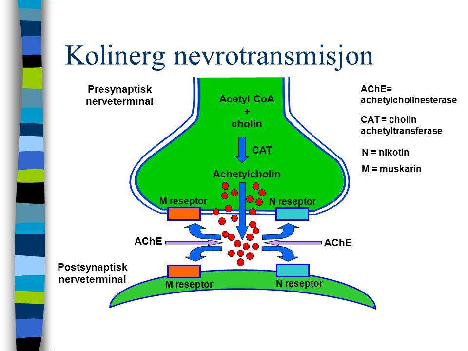 Presynaptisk nerveterminal Postsynaptisk nerveterminal CAT = cholin achetyltransferase AChE= achetylcholinesterase N = nikotin M = muskarin Acetyl CoA