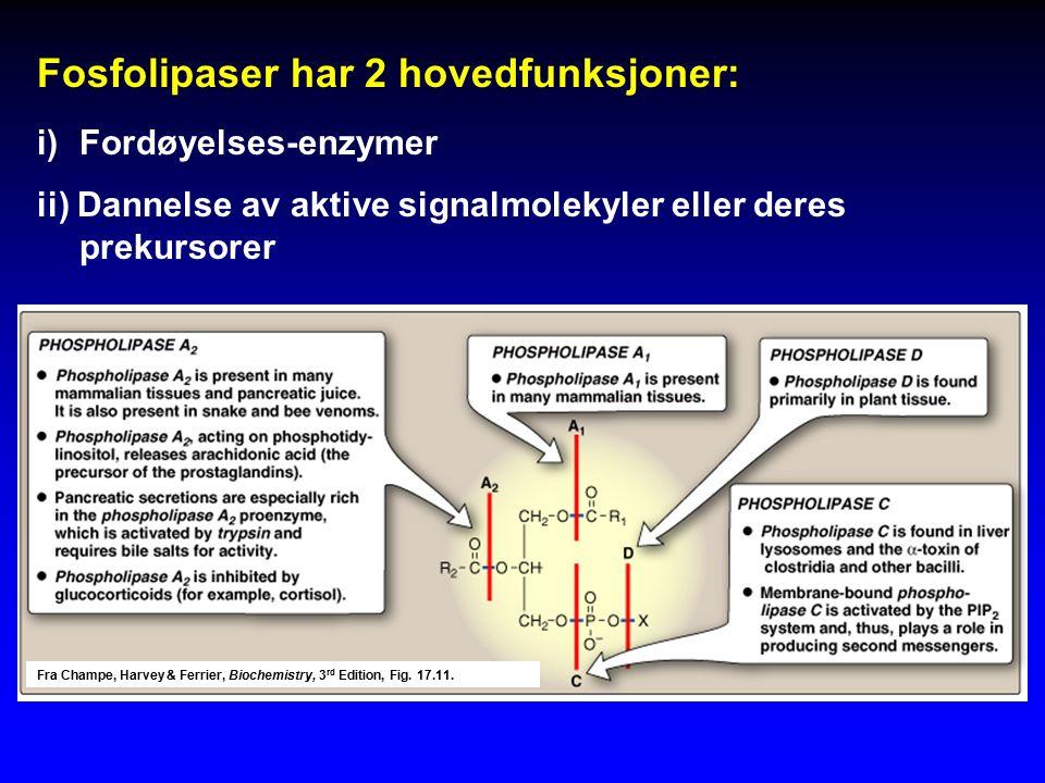 Fosfolipaser har 2 hovedfunksjoner: i)Fordøyelses-enzymer ii) Dannelse av aktive signalmolekyler eller deres prekursorer Fra Champe, Harvey & Ferrier, Biochemistry, 3 rd Edition, Fig.