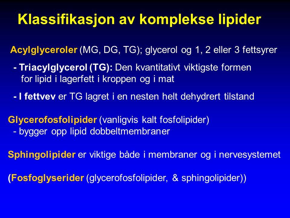 Klassifikasjon av komplekse lipider Acylglyceroler (MG, DG, TG); glycerol og 1, 2 eller 3 fettsyrer - Triacylglycerol (TG): Den kvantitativt viktigste formen for lipid i lagerfett i kroppen og i mat - I fettvev er TG lagret i en nesten helt dehydrert tilstand Glycerofosfolipider (vanligvis kalt fosfolipider) - bygger opp lipid dobbeltmembraner Sphingolipider er viktige både i membraner og i nervesystemet (Fosfoglyserider (glycerofosfolipider, & sphingolipider))