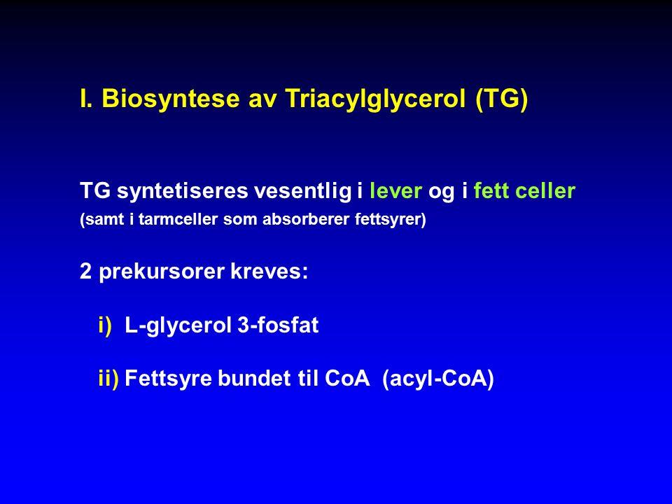 I. Biosyntese av Triacylglycerol (TG) TG syntetiseres vesentlig i lever og i fett celler (samt i tarmceller som absorberer fettsyrer) 2 prekursorer kr
