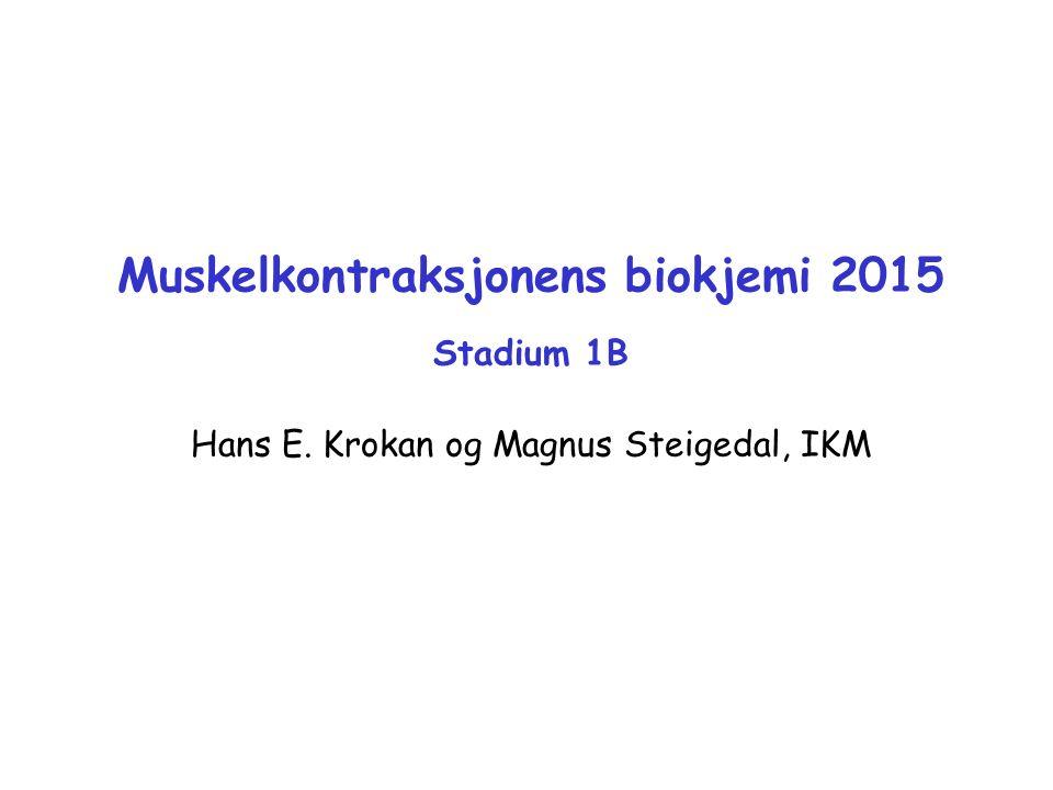Muskelkontraksjonens biokjemi 2015 Stadium 1B Hans E. Krokan og Magnus Steigedal, IKM