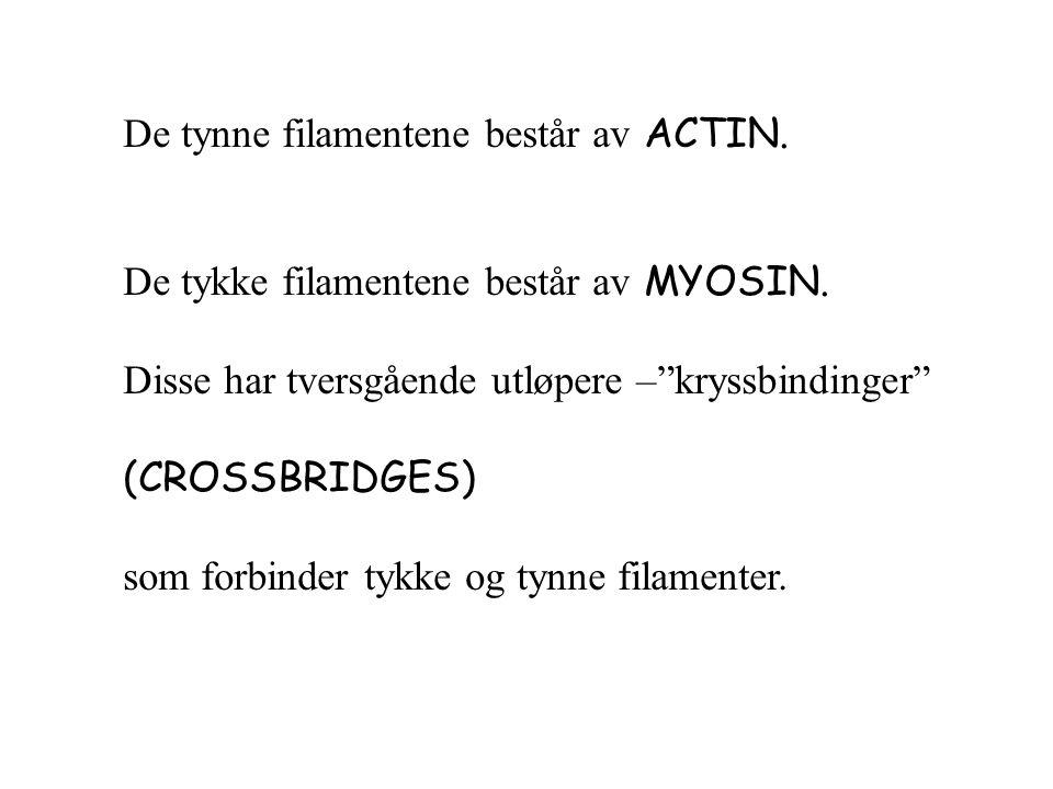 De tynne filamentene består av ACTIN. De tykke filamentene består av MYOSIN.