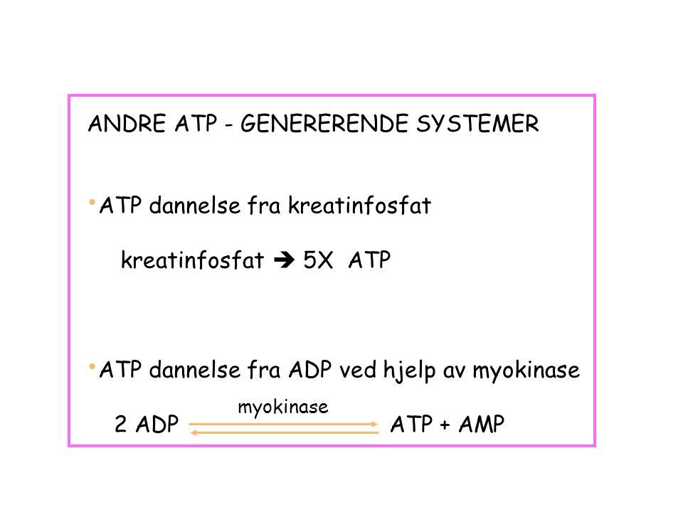 ANDRE ATP - GENERERENDE SYSTEMER ATP dannelse fra kreatinfosfat kreatinfosfat  5X ATP ATP dannelse fra ADP ved hjelp av myokinase 2 ADP ATP + AMP myokinase