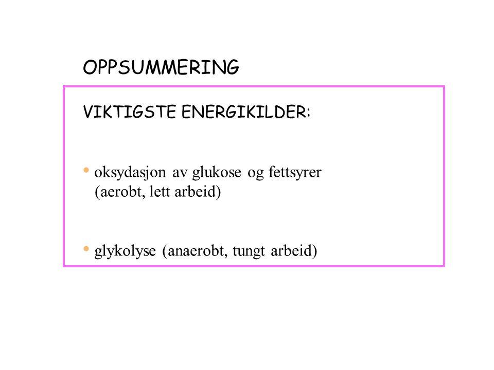 OPPSUMMERING VIKTIGSTE ENERGIKILDER: oksydasjon av glukose og fettsyrer (aerobt, lett arbeid) glykolyse (anaerobt, tungt arbeid)
