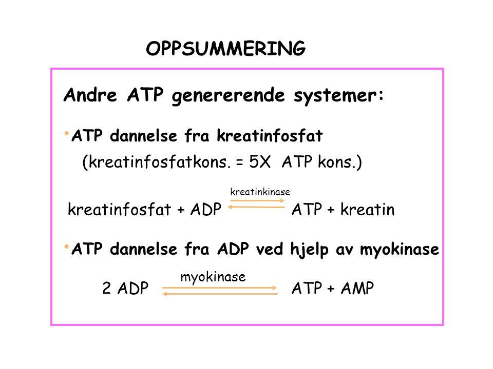 OPPSUMMERING Andre ATP genererende systemer: ATP dannelse fra kreatinfosfat (kreatinfosfatkons.