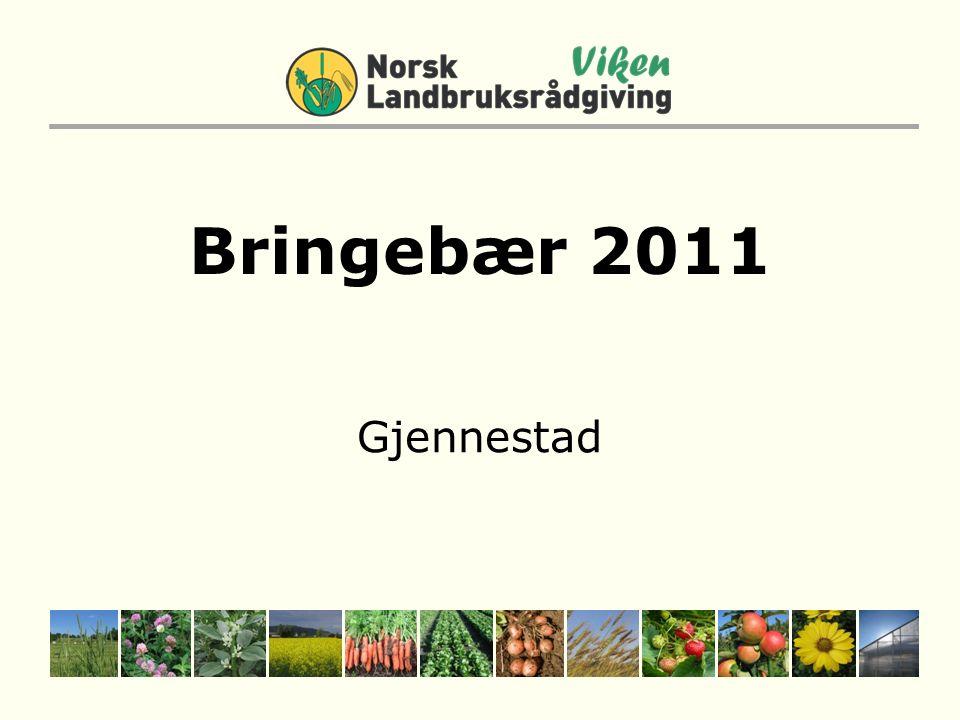 Bringebær 2011 Gjennestad