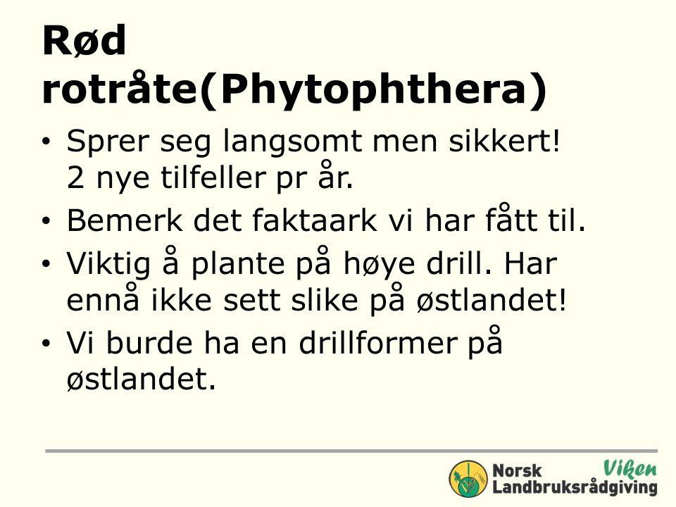 Rød rotråte(Phytophthera) Sprer seg langsomt men sikkert.