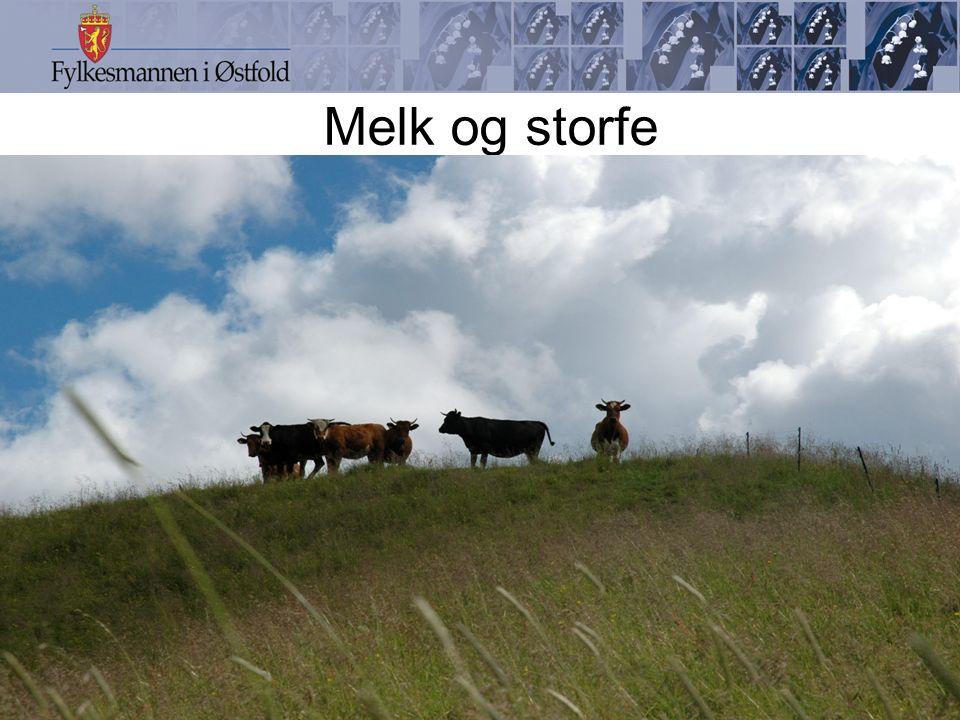 Melk og storfe