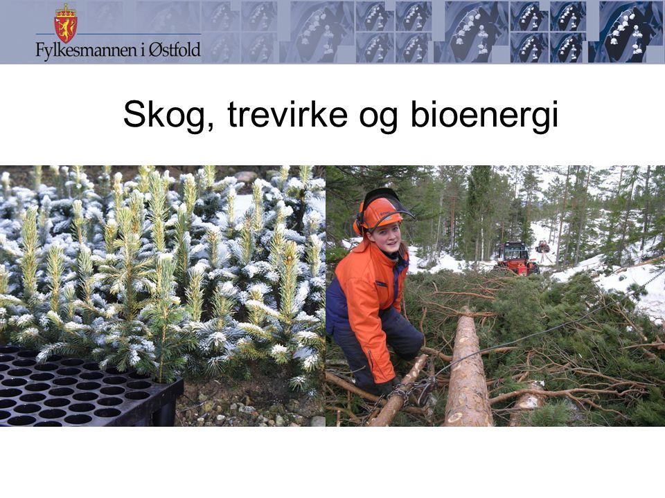 Skog, trevirke og bioenergi