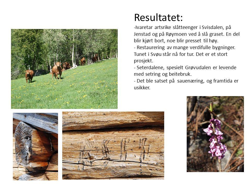 Resultatet: -Ivaretar artsrike slåtteenger i Svisdalen, på Jenstad og på Røymoen ved å slå graset.