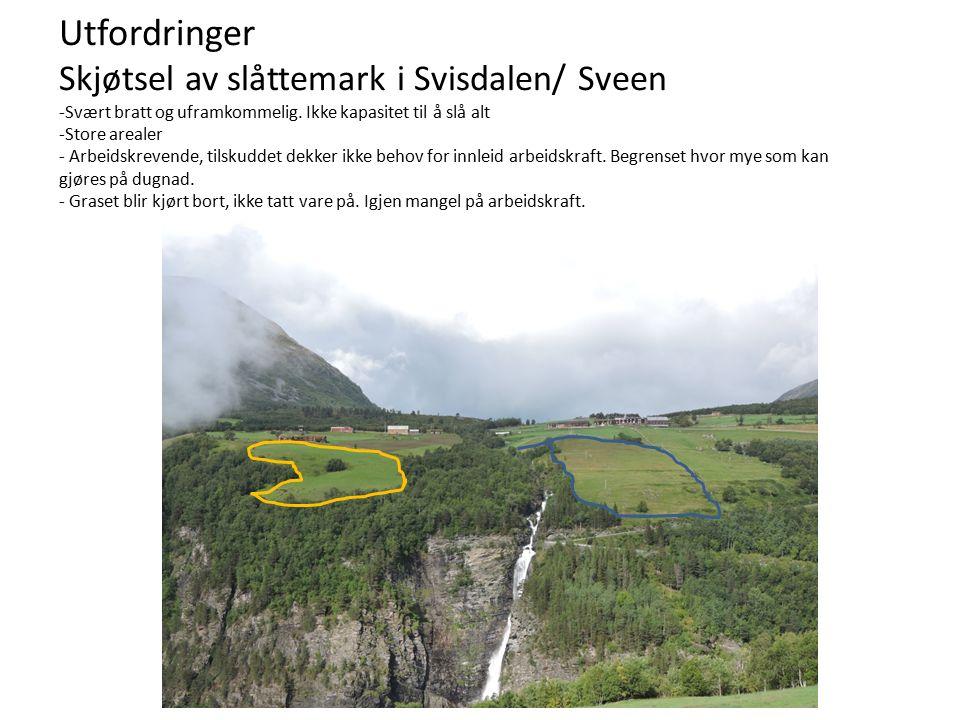 Utfordringer Skjøtsel av slåttemark i Svisdalen/ Sveen -Svært bratt og uframkommelig.