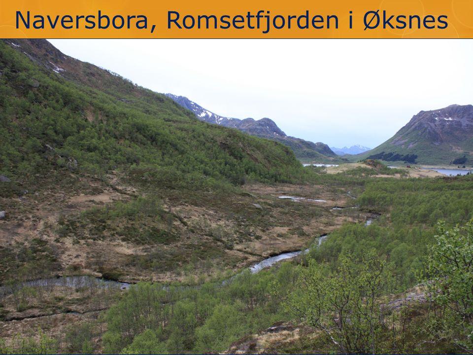 Naversbora, Romsetfjorden i Øksnes