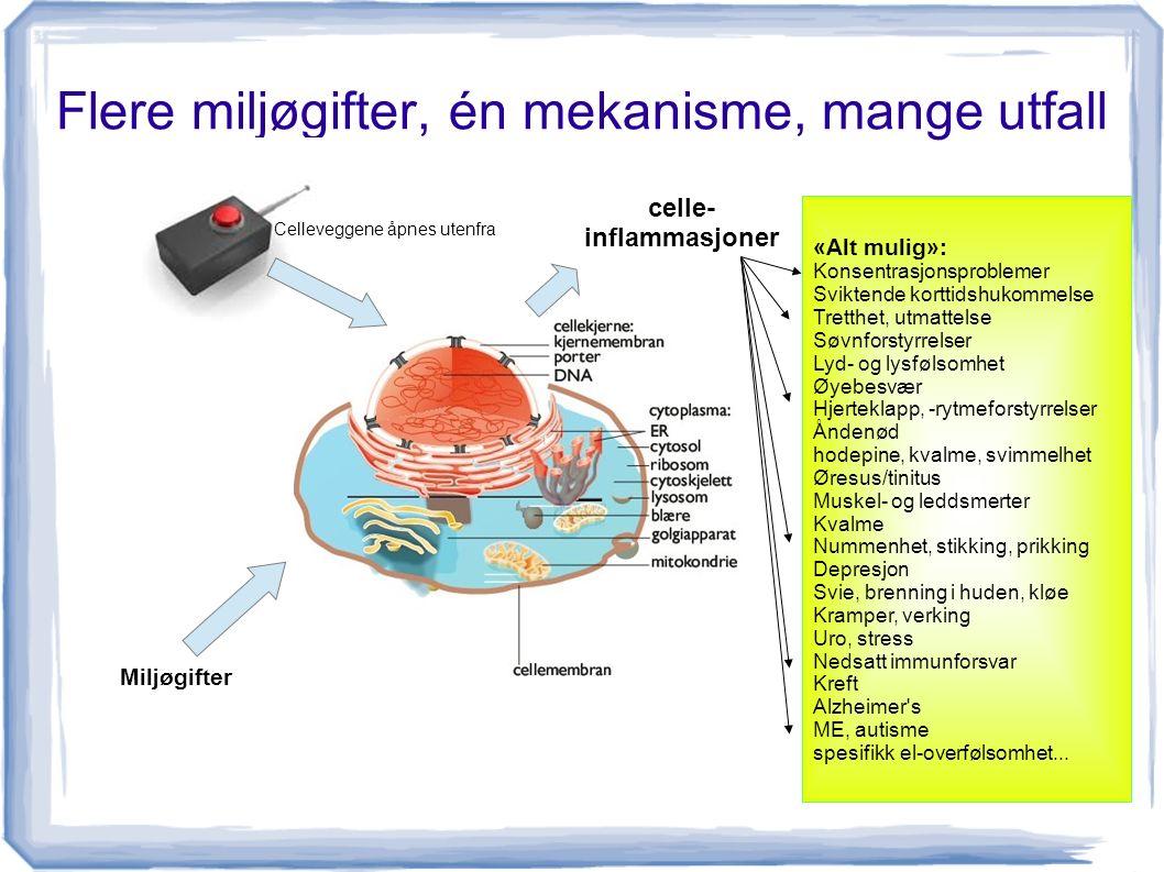 Flere miljøgifter, én mekanisme, mange utfall «Alt mulig»: Konsentrasjonsproblemer Sviktende korttidshukommelse Tretthet, utmattelse Søvnforstyrrelser Lyd- og lysfølsomhet Øyebesvær Hjerteklapp, -rytmeforstyrrelser Åndenød hodepine, kvalme, svimmelhet Øresus/tinitus Muskel- og leddsmerter Kvalme Nummenhet, stikking, prikking Depresjon Svie, brenning i huden, kløe Kramper, verking Uro, stress Nedsatt immunforsvar Kreft Alzheimer s ME, autisme spesifikk el-overfølsomhet...