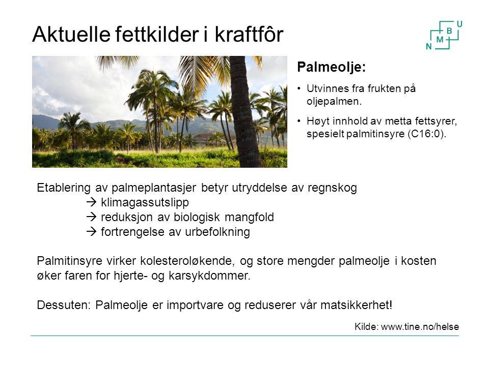 Aktuelle fettkilder i kraftfôr Etablering av palmeplantasjer betyr utryddelse av regnskog  klimagassutslipp  reduksjon av biologisk mangfold  fortr
