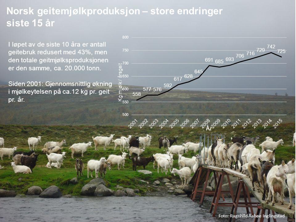 2 Kg milk / goat / year I løpet av de siste 10 åra er antall geitebruk redusert med 43%, men den totale geitmjølksproduksjonen er den samme, ca. 20.00