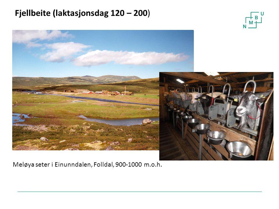 23 Fjellbeite (laktasjonsdag 120 – 200) Meløya seter i Einunndalen, Folldal, 900-1000 m.o.h.