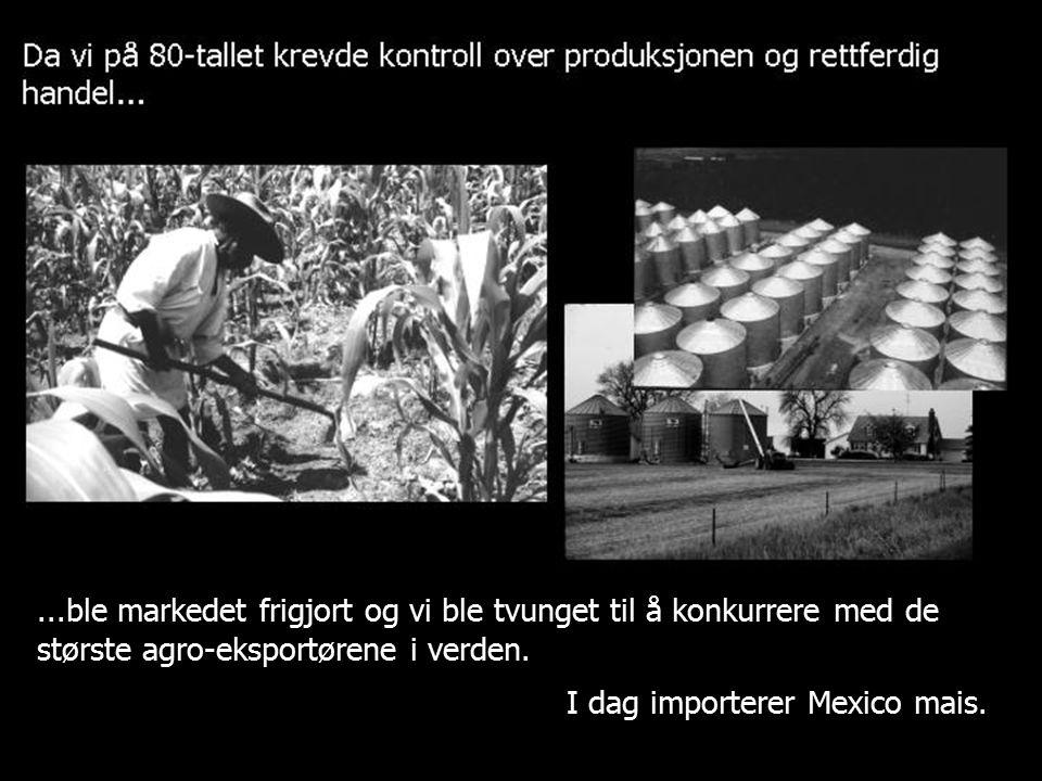 ...ble markedet frigjort og vi ble tvunget til å konkurrere med de største agro-eksportørene i verden. I dag importerer Mexico mais.