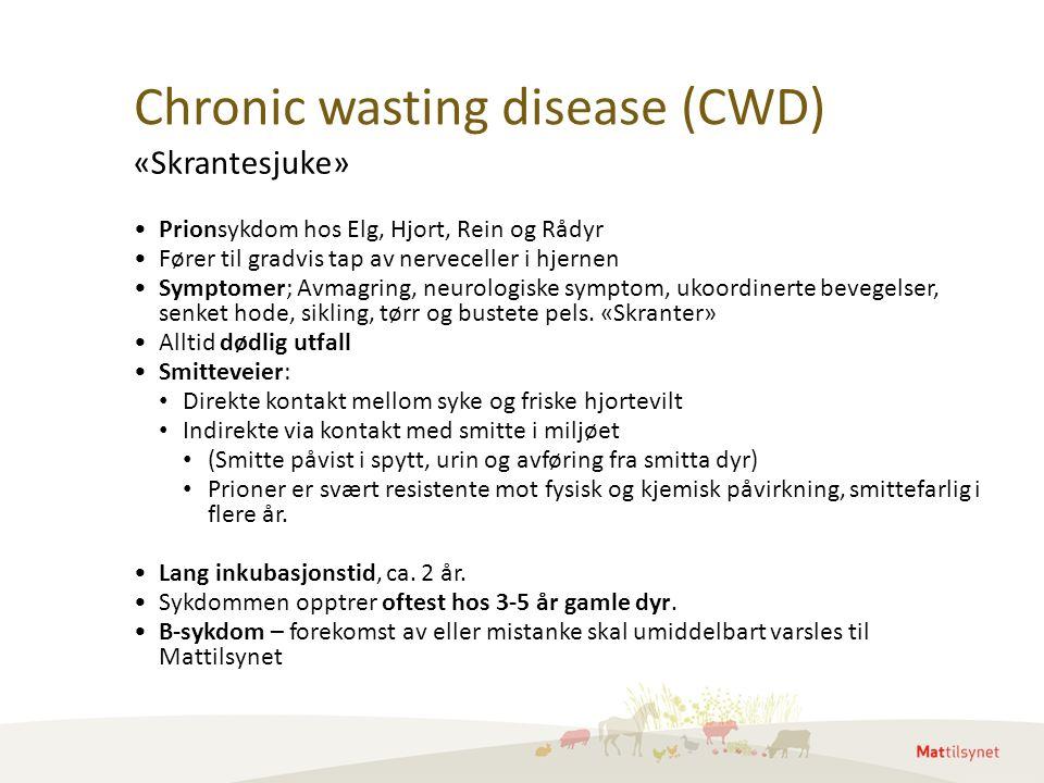 Chronic wasting disease (CWD) Prionsykdom hos Elg, Hjort, Rein og Rådyr Fører til gradvis tap av nerveceller i hjernen Symptomer; Avmagring, neurologiske symptom, ukoordinerte bevegelser, senket hode, sikling, tørr og bustete pels.