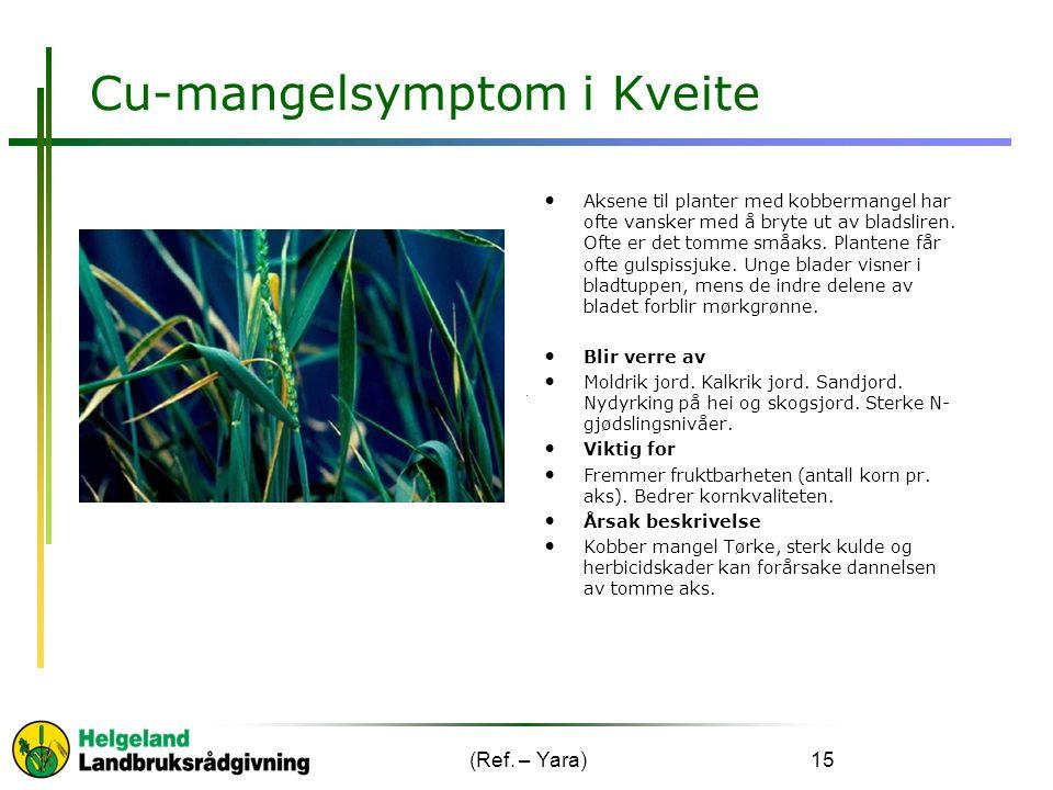 Cu-mangelsymptom i Kveite Aksene til planter med kobbermangel har ofte vansker med å bryte ut av bladsliren.
